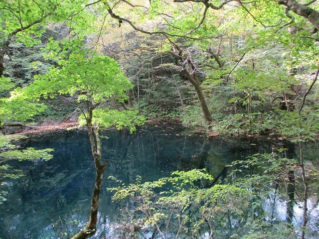 画像9: 【山旅会・登山ガイドこだわりツアー】添乗員からの便り・白神山地ツアーにいってまいりました!(その1)