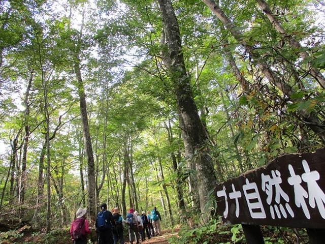 画像8: 【山旅会・登山ガイドこだわりツアー】添乗員からの便り・白神山地ツアーにいってまいりました!(その1)