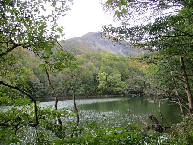 画像6: 【山旅会・登山ガイドこだわりツアー】添乗員からの便り・白神山地ツアーにいってまいりました!(その1)
