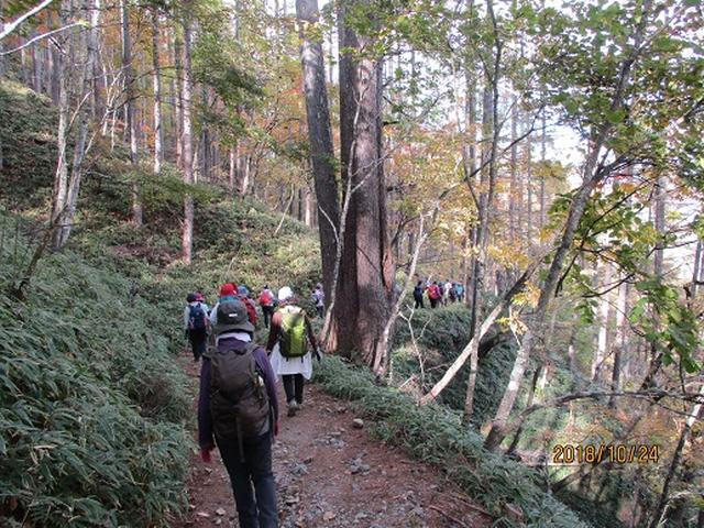 画像12: 【山旅会・登山ガイドこだわりツアー】岡田ガイドからの便り・夜叉神峠から高谷山ツアーにいってまいりました!