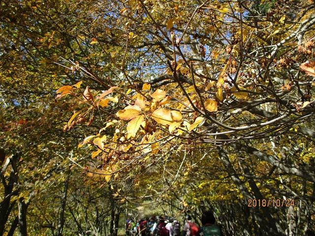 画像11: 【山旅会・登山ガイドこだわりツアー】岡田ガイドからの便り・夜叉神峠から高谷山ツアーにいってまいりました!