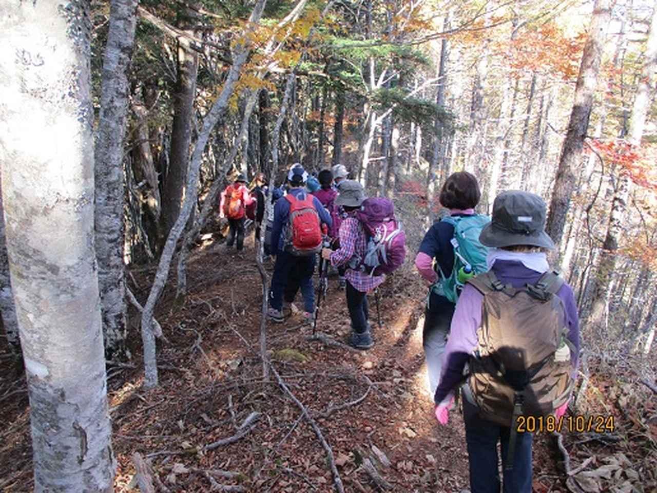 画像8: 【山旅会・登山ガイドこだわりツアー】岡田ガイドからの便り・夜叉神峠から高谷山ツアーにいってまいりました!