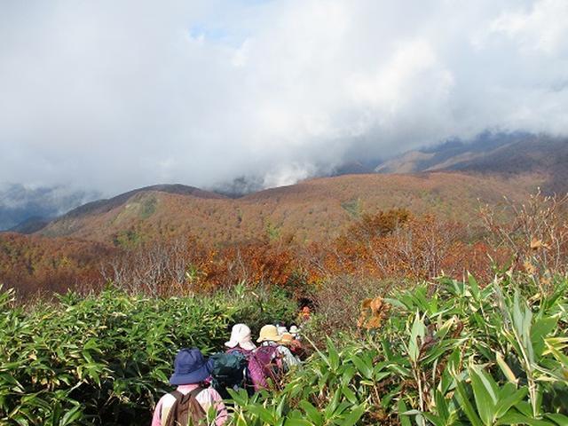 画像5: 【山旅会・登山ガイドこだわりツアー】添乗員からの便り・白神山地ツアーにいってまいりました!(その3)