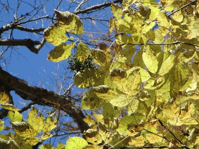 画像9: 【山旅会・登山ガイドこだわりツアー】岡田ガイドからの便り・夜叉神峠から高谷山ツアーにいってまいりました!