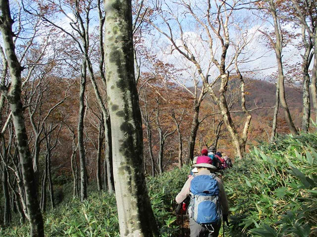 画像6: 【山旅会・登山ガイドこだわりツアー】添乗員からの便り・白神山地ツアーにいってまいりました!(その3)