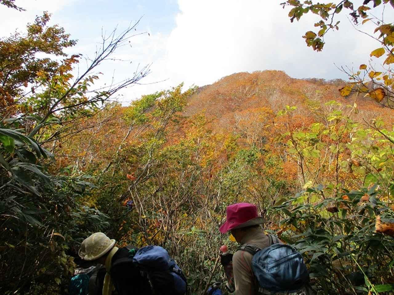 画像7: 【山旅会・登山ガイドこだわりツアー】添乗員からの便り・白神山地ツアーにいってまいりました!(その3)