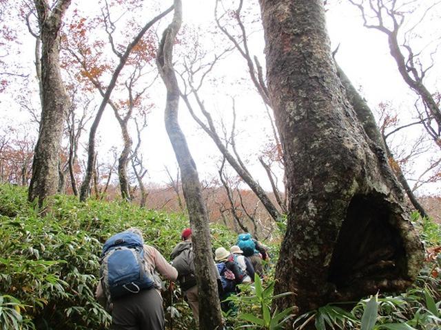 画像2: 【山旅会・登山ガイドこだわりツアー】添乗員からの便り・白神山地ツアーにいってまいりました!(その3)