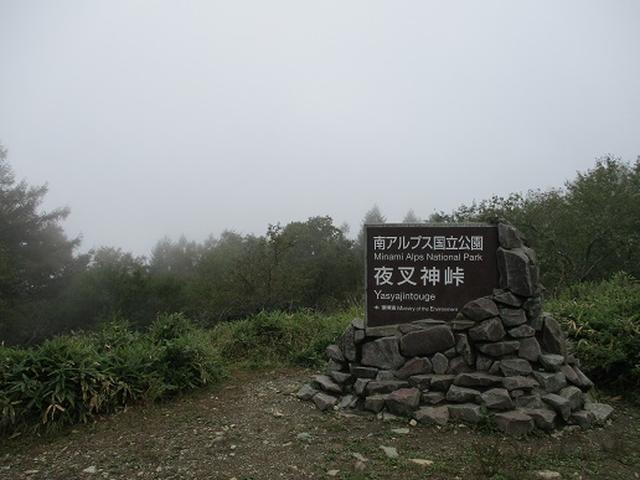 画像4: 【山旅会・登山ガイドこだわりツアー】岡田ガイドからの便り・夜叉神峠から高谷山ツアーにいってまいりました!