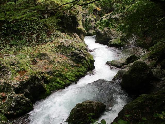 画像9: 【山旅会・登山ガイドこだわりツアー】添乗員からの便り・白神山地ツアーにいってまいりました!(その3)
