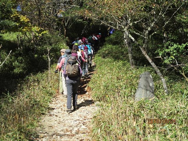 画像3: 【山旅会・登山ガイドこだわりツアー】岡田ガイドからの便り・夜叉神峠から高谷山ツアーにいってまいりました!