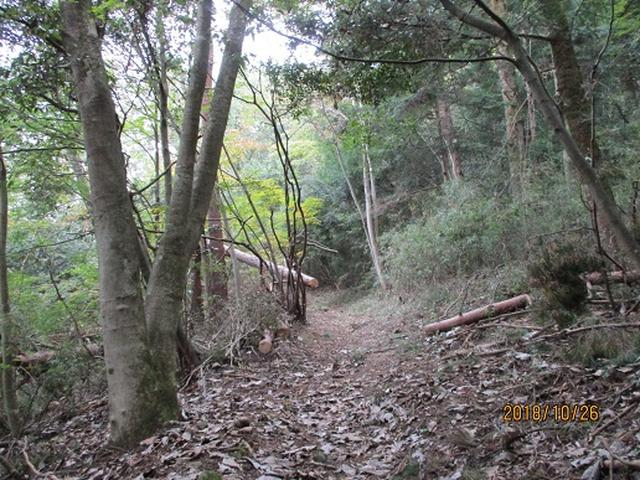 画像2: 【山旅会・登山ガイドこだわりツアー】岡田ガイドからの便り・扇山の下見にいってまいりました!