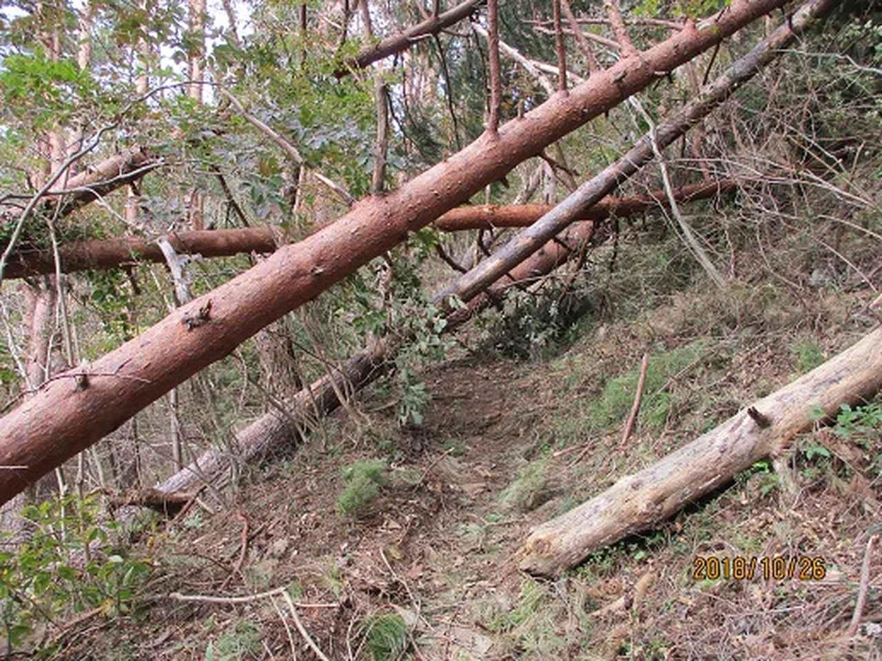 画像3: 【山旅会・登山ガイドこだわりツアー】岡田ガイドからの便り・扇山の下見にいってまいりました!