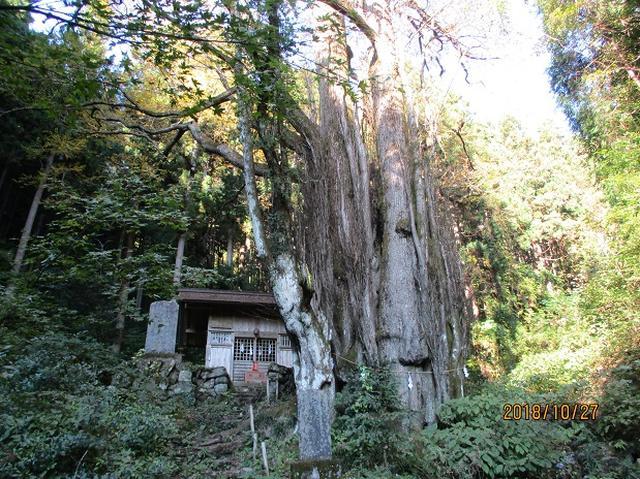 画像11: 【山旅会・登山ガイドこだわりツアー】岡田ガイドからの便り・浅間峠から生藤山ツアーにいってまいりました!