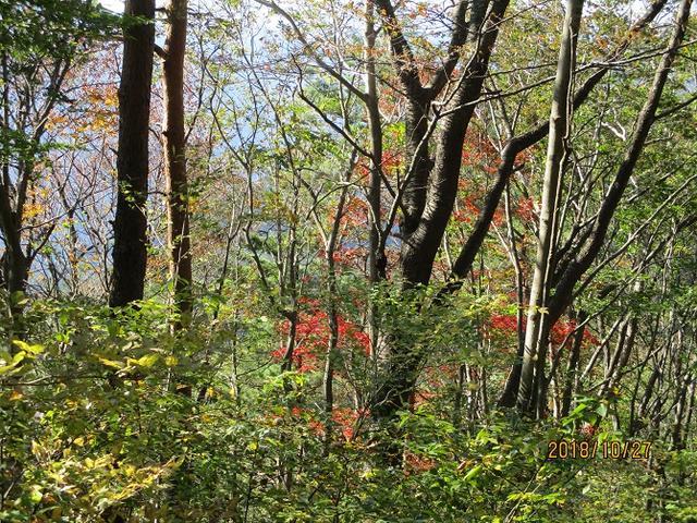 画像8: 【山旅会・登山ガイドこだわりツアー】岡田ガイドからの便り・浅間峠から生藤山ツアーにいってまいりました!