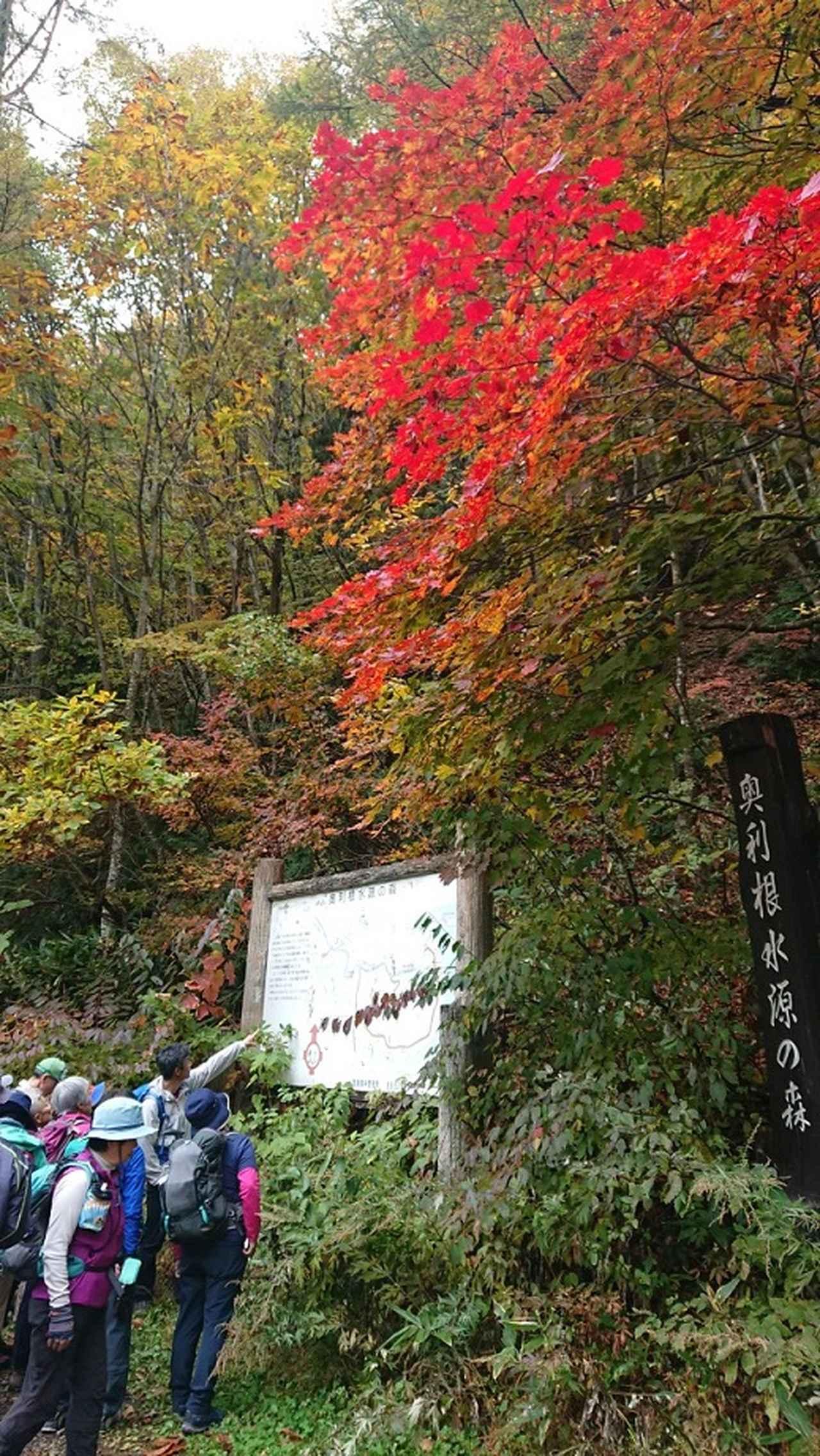 画像3: 【山旅会・登山ガイドこだわりツアー】岡田ガイドからの便り・照葉峡ハイキングツアーにいってまいりました!