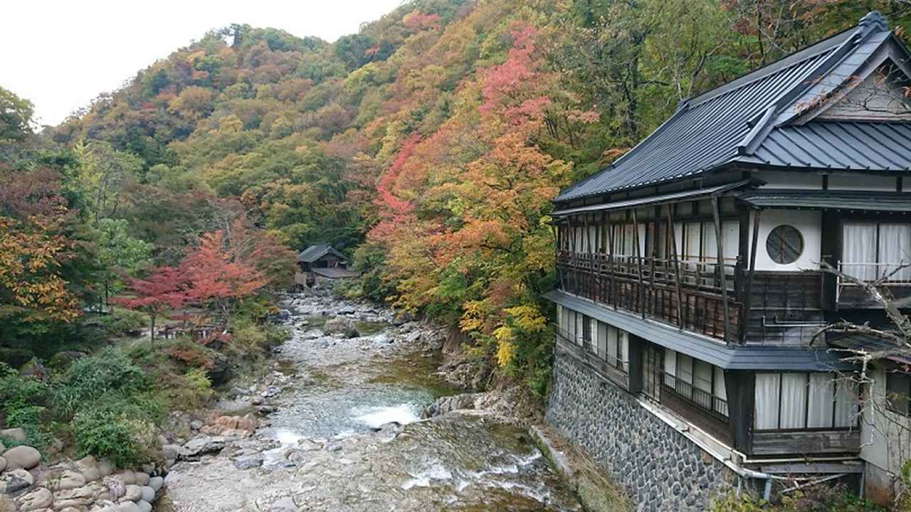画像10: 【山旅会・登山ガイドこだわりツアー】岡田ガイドからの便り・照葉峡ハイキングツアーにいってまいりました!