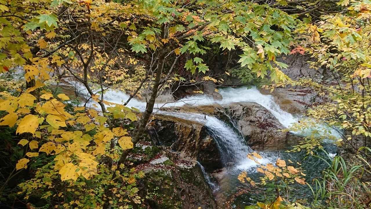 画像2: 【山旅会・登山ガイドこだわりツアー】岡田ガイドからの便り・照葉峡ハイキングツアーにいってまいりました!