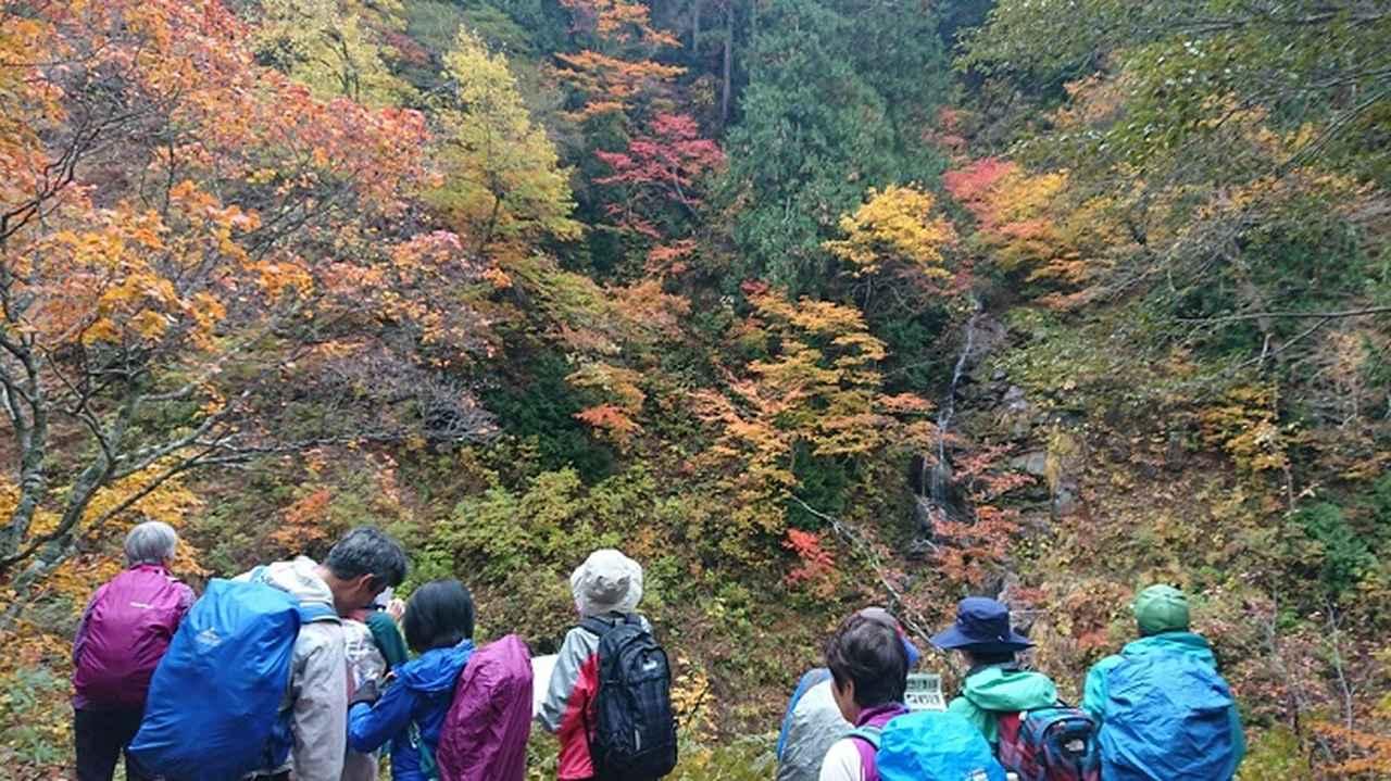 画像8: 【山旅会・登山ガイドこだわりツアー】岡田ガイドからの便り・照葉峡ハイキングツアーにいってまいりました!