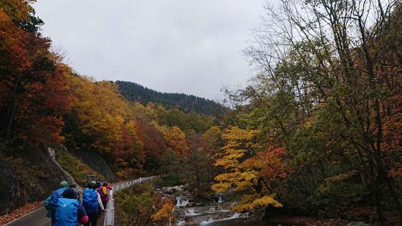 画像7: 【山旅会・登山ガイドこだわりツアー】岡田ガイドからの便り・照葉峡ハイキングツアーにいってまいりました!