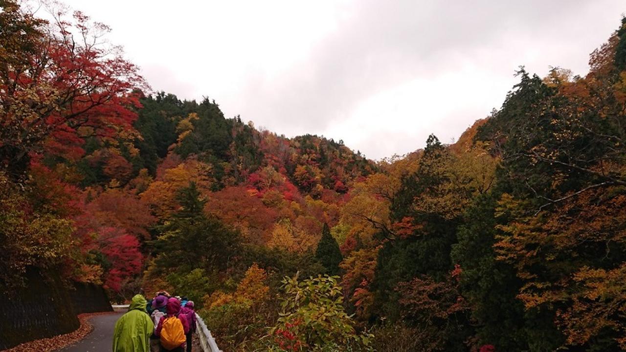 画像5: 【山旅会・登山ガイドこだわりツアー】岡田ガイドからの便り・照葉峡ハイキングツアーにいってまいりました!