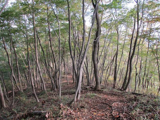 画像6: 【山旅会・登山ガイドこだわりツアー】岡田ガイドからの便り・和田峠から市道山ツアーの下見にいってまいりました!