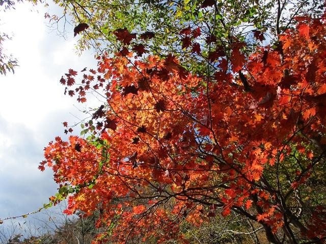 画像6: 【山旅会・登山ガイドこだわりツアー】岡田ガイドからの便り・霊山ツアーにいってまいりました!