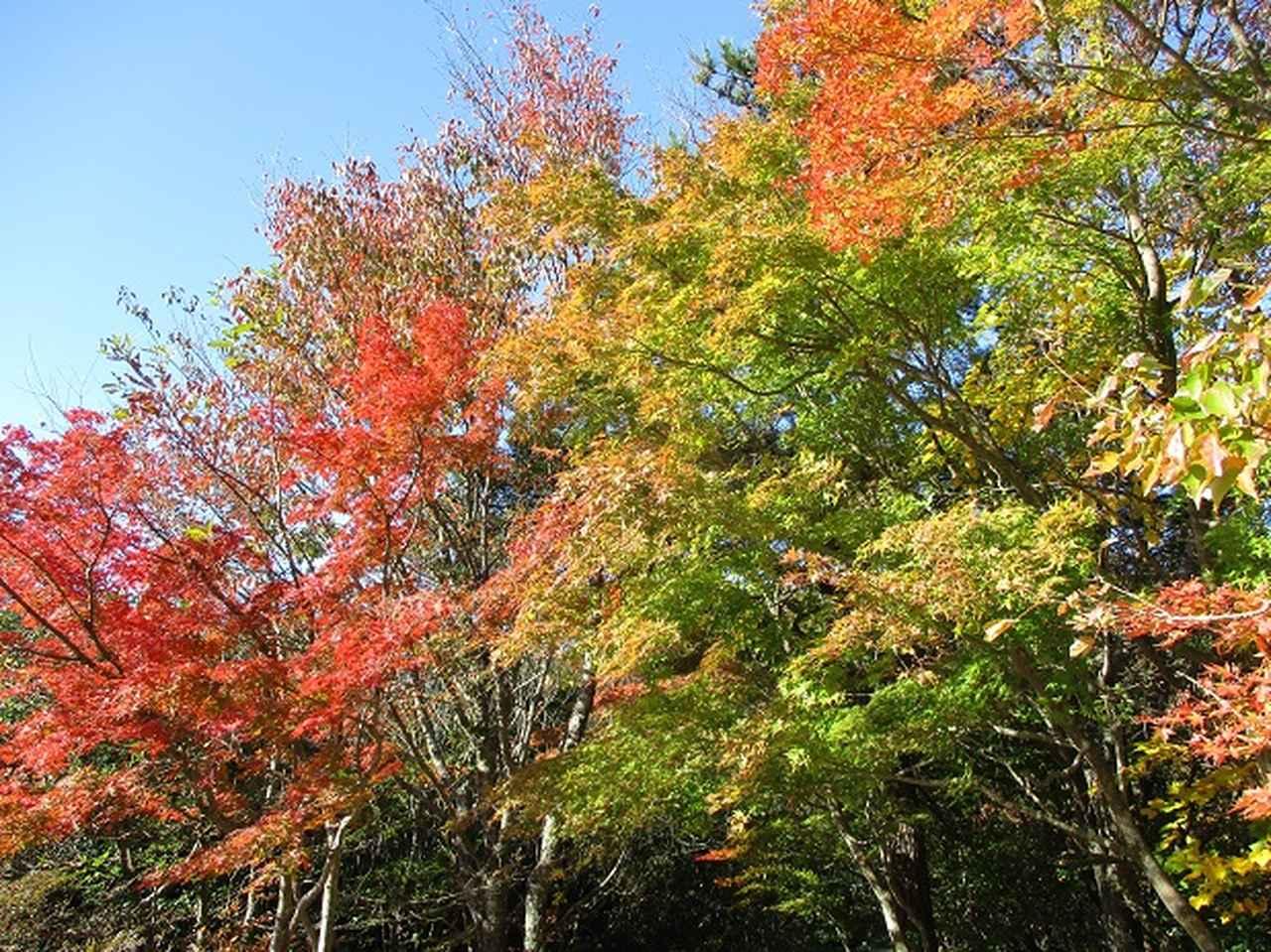 画像2: 【山旅会・登山ガイドこだわりツアー】山旅会ツアー12月までの催行状況