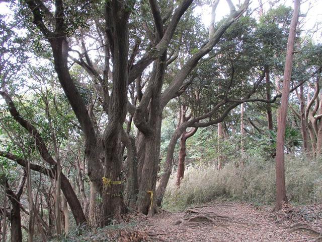 画像9: 【山旅会・登山ガイドこだわりツアー】岡田ガイドからの便り・散在ヶ池から祇園山ツアーの下見にいってまいりました!
