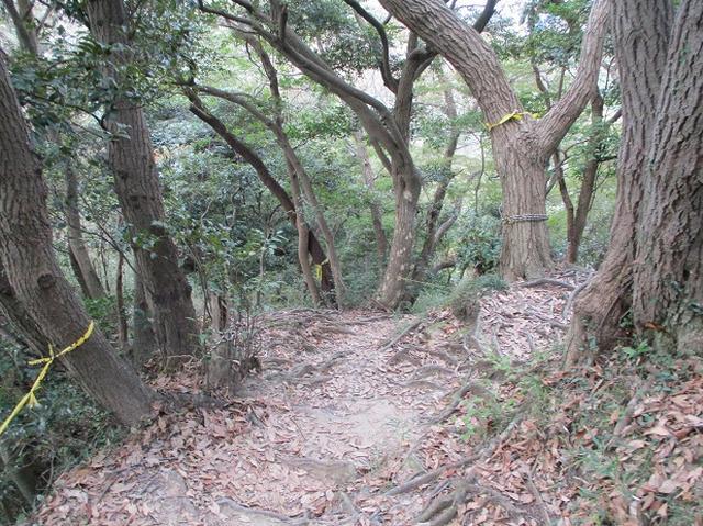 画像8: 【山旅会・登山ガイドこだわりツアー】岡田ガイドからの便り・散在ヶ池から祇園山ツアーの下見にいってまいりました!