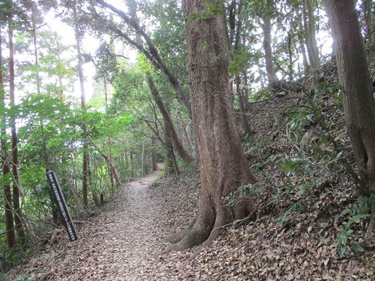 画像5: 【山旅会・登山ガイドこだわりツアー】岡田ガイドからの便り・散在ヶ池から祇園山ツアーの下見にいってまいりました!