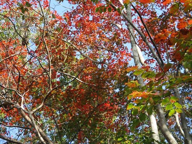 画像5: 【山旅会・登山ガイドこだわりツアー】岡田ガイドからの便り・臼杵山ツアーの下見にいってまいりました!
