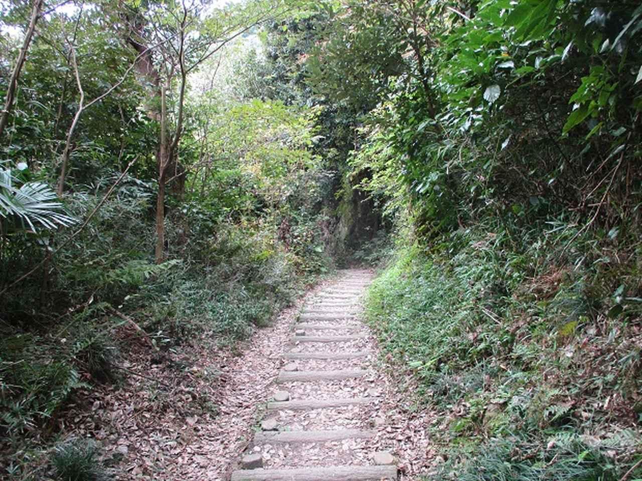 画像6: 【山旅会・登山ガイドこだわりツアー】岡田ガイドからの便り・散在ヶ池から祇園山ツアーの下見にいってまいりました!