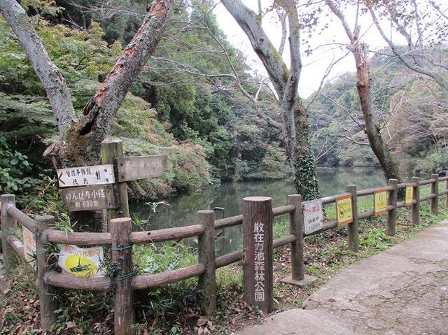 画像1: 【山旅会・登山ガイドこだわりツアー】岡田ガイドからの便り・散在ヶ池から祇園山ツアーの下見にいってまいりました!
