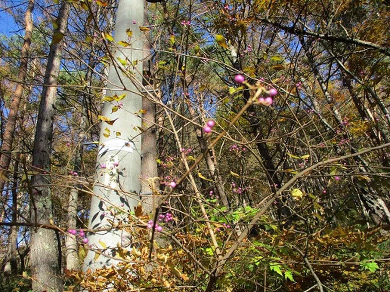 画像10: 【山旅会・登山ガイドこだわりツアー】岡田ガイドからの便り・守屋山の2回目のツアーにいってまいりました!