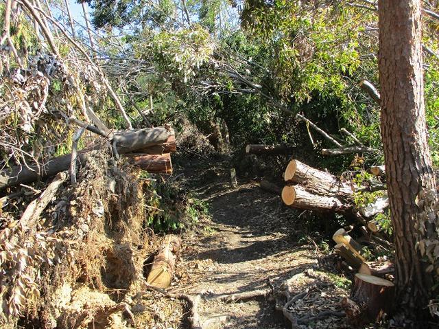 画像6: 【山旅会・登山ガイドこだわりツアー】岡田ガイドからの便り・大文字山の下見にいってまいりました!
