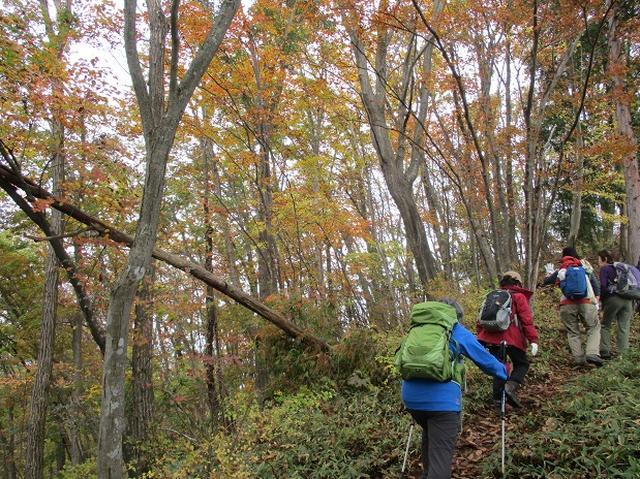画像3: 【山旅会・登山ガイドこだわりツアー】岡田ガイドからの便り・和田峠から市道山ツアーにいってまいりました!