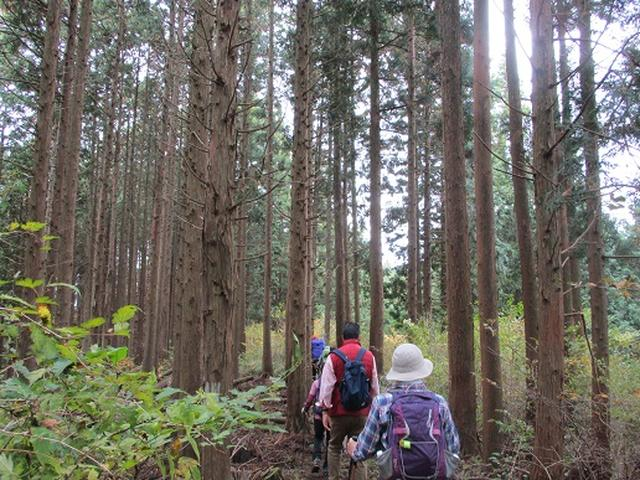 画像1: 【山旅会・登山ガイドこだわりツアー】岡田ガイドからの便り・和田峠から市道山ツアーにいってまいりました!