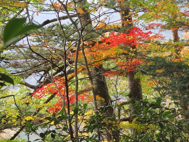 画像8: 【山旅会・登山ガイドこだわりツアー】岡田ガイドからの便り・和田峠から市道山ツアーにいってまいりました!