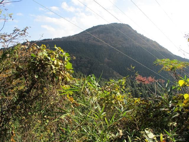 画像8: 【山旅会・登山ガイドこだわりツアー】岡田ガイドからの便り矢倉岳の下見にいってまいりました!