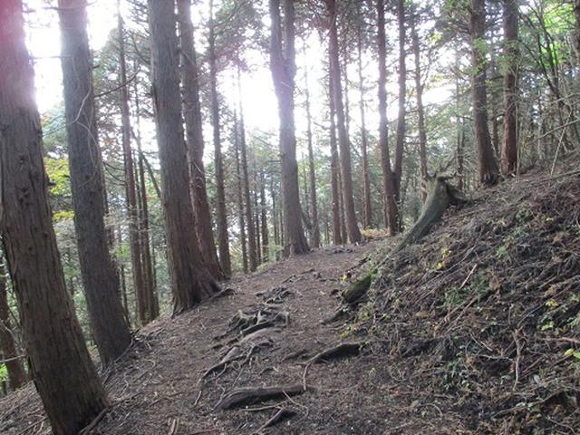 画像7: 【山旅会・登山ガイドこだわりツアー】岡田ガイドからの便り矢倉岳の下見にいってまいりました!