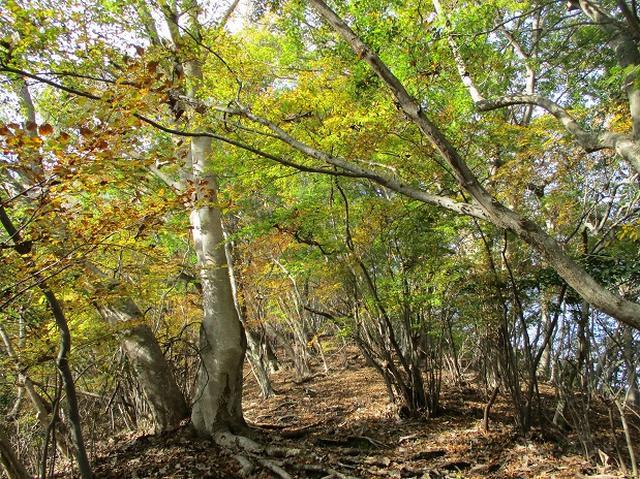 画像3: 【山旅会・登山ガイドこだわりツアー】岡田ガイドからの便り矢倉岳の下見にいってまいりました!