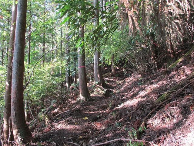画像2: 【山旅会・登山ガイドこだわりツアー】岡田ガイドからの便り矢倉岳の下見にいってまいりました!