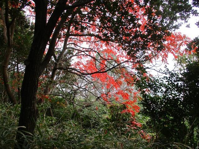画像5: 【山旅会・登山ガイドこだわりツアー】岡田ガイドからの便り飯野山ツアーにいってまいりました!
