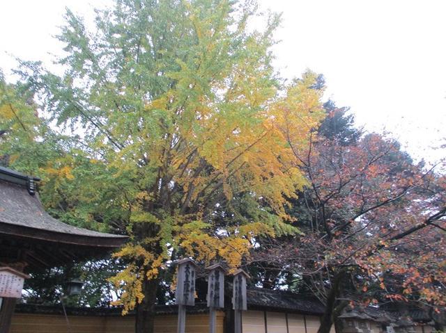 画像10: 【山旅会・登山ガイドこだわりツアー】岡田ガイドからの便り飯野山ツアーにいってまいりました!