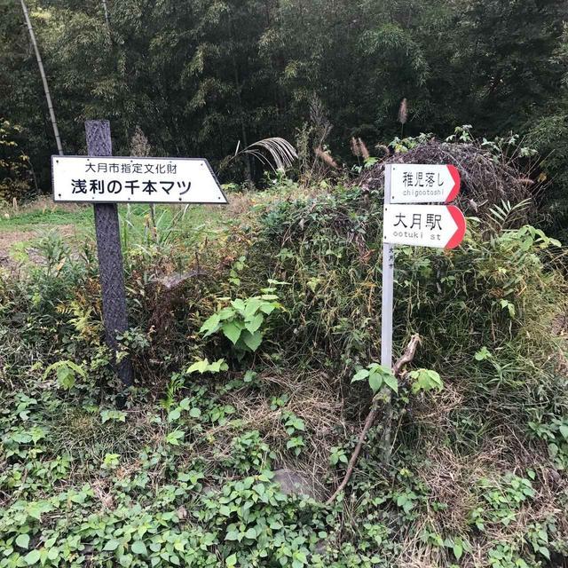 画像: 登山口。ここからスタートです!