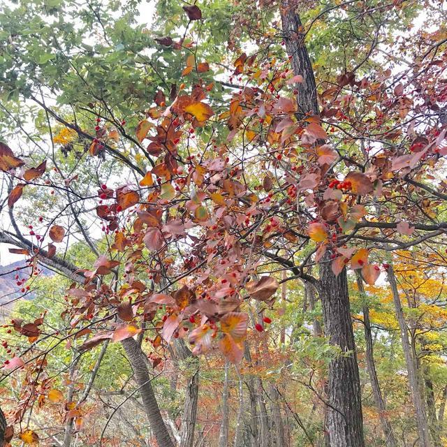 画像4: 【山あるきへの招待状】岩場歩きと手作り山ごはんin山梨県大月市・岩殿山
