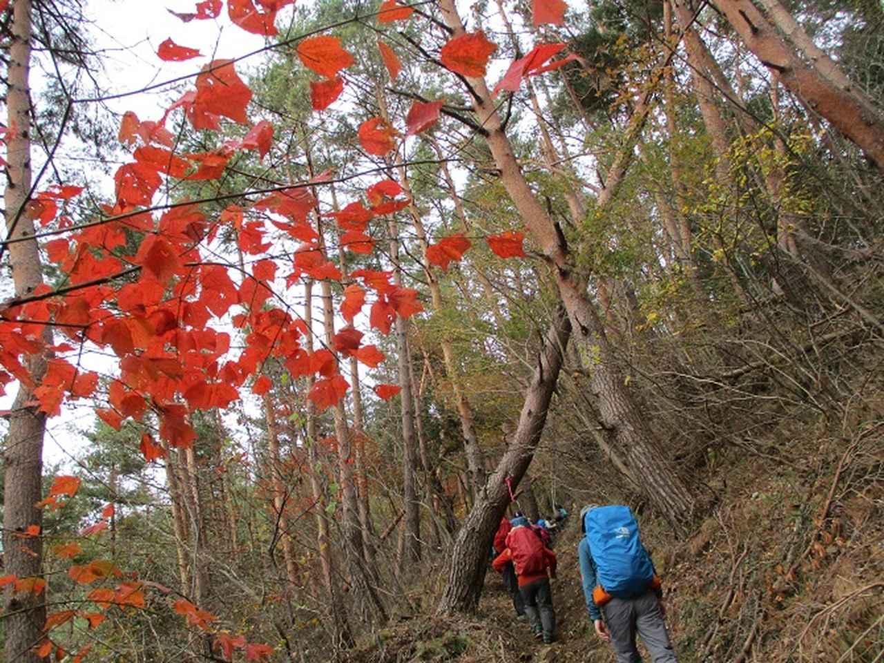 画像3: 【山旅会・登山ガイドこだわりツアー】添乗員からの便り・扇山ツアーにいってまいりました!