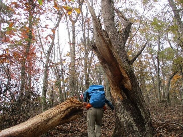 画像5: 【山旅会・登山ガイドこだわりツアー】添乗員からの便り・扇山ツアーにいってまいりました!