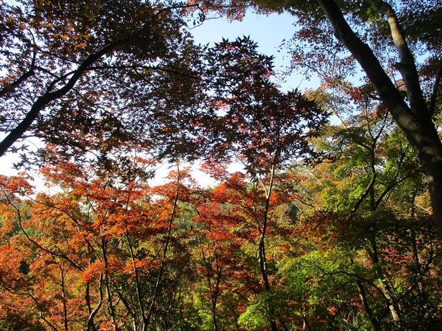 画像2: 【山旅会・登山ガイドこだわりツアー】岡田ガイドからの便り・両崖山から天狗山ツアーにいってまいりました!