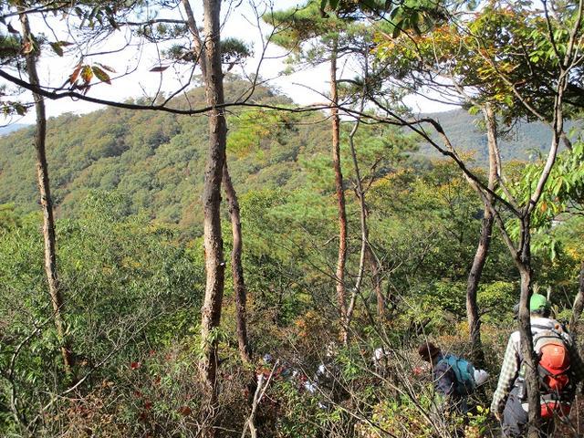 画像7: 【山旅会・登山ガイドこだわりツアー】岡田ガイドからの便り・両崖山から天狗山ツアーにいってまいりました!